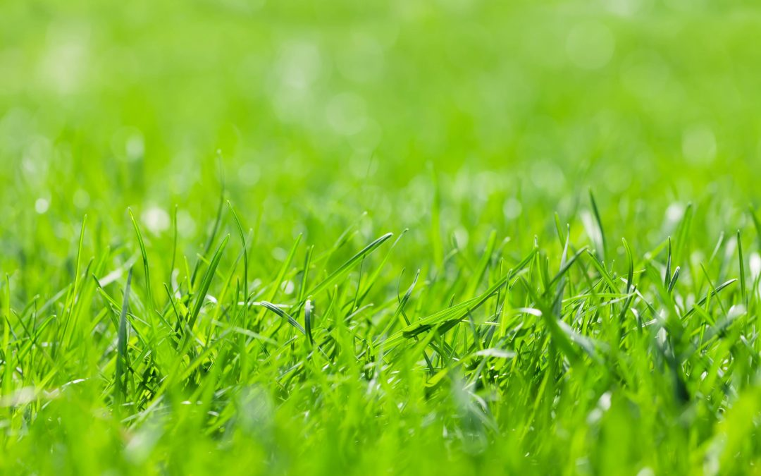 Steps for Planting Grass Seed