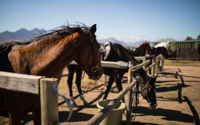 Caring For Your Race Horses