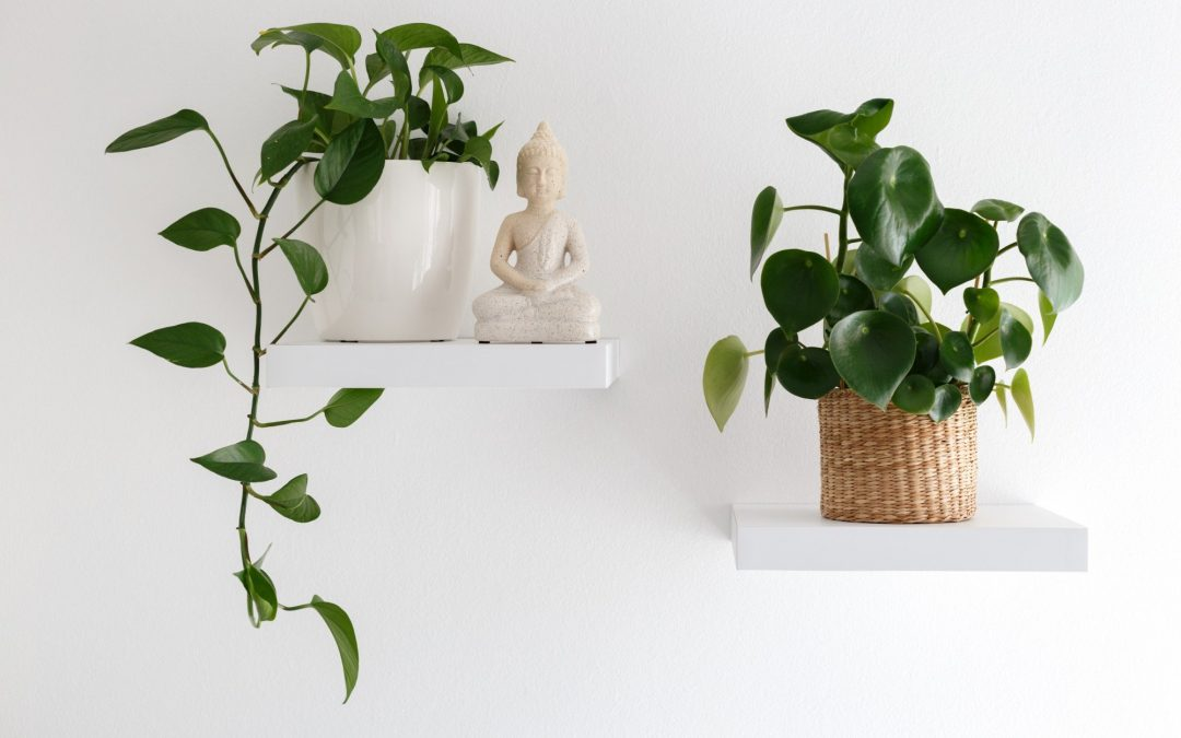Perfect Shelves for Your Home