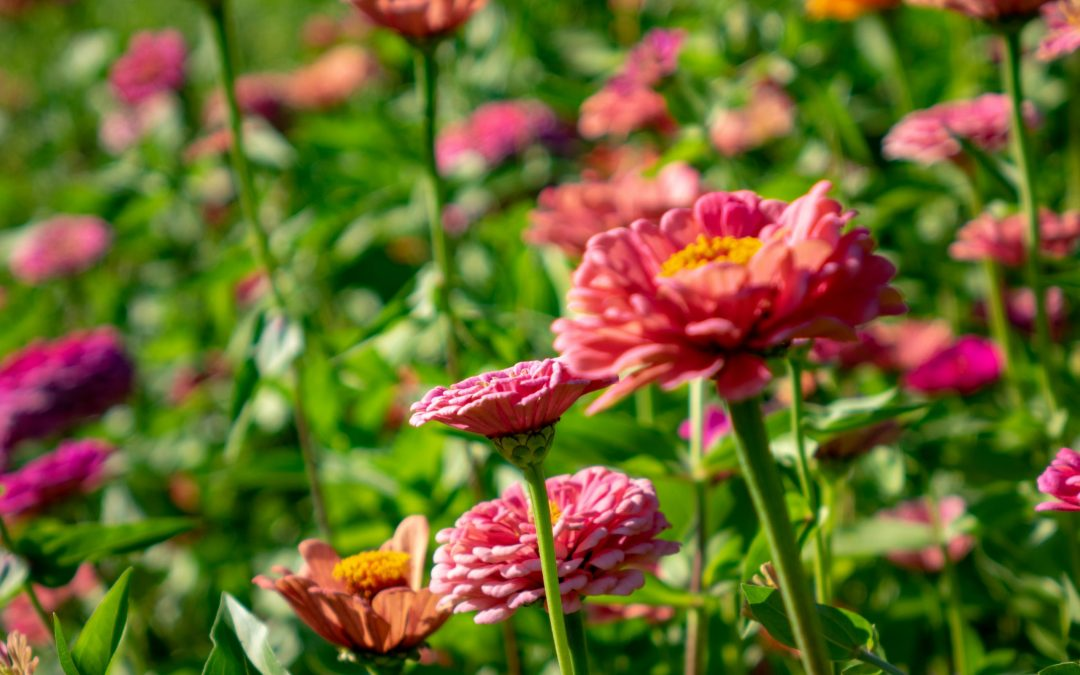 Gardening Tools For a Blooming Garden