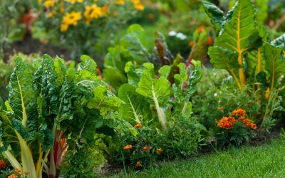 The Best Kept Secret to Make Your Harvest Grow