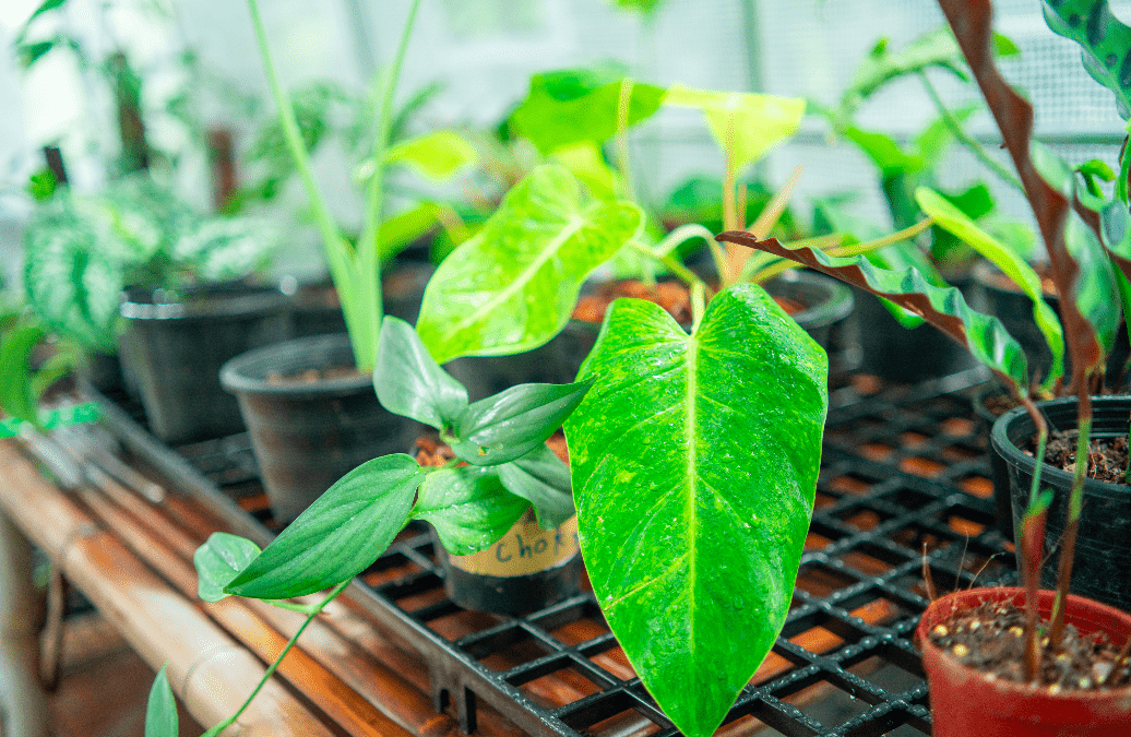 How to Ensure Your Plants Grow